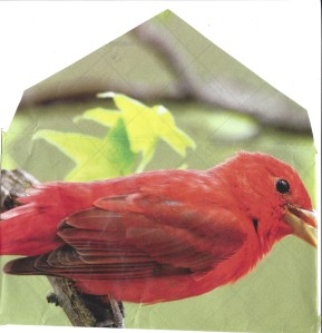 bird envelope