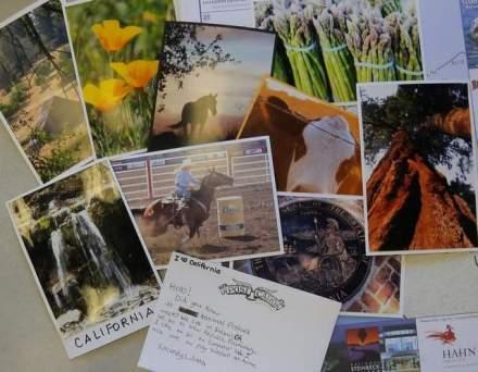postcards sandi mccafferty