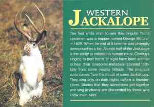 jackalope0001